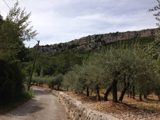 """Olive grove and cliffs near Pont"""